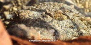 Marocco- crocodile parc